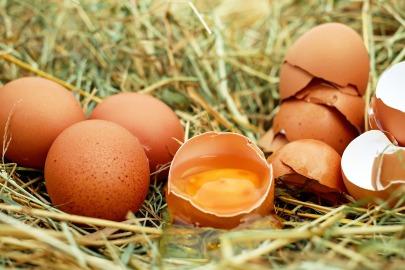 egg-1510449_1920